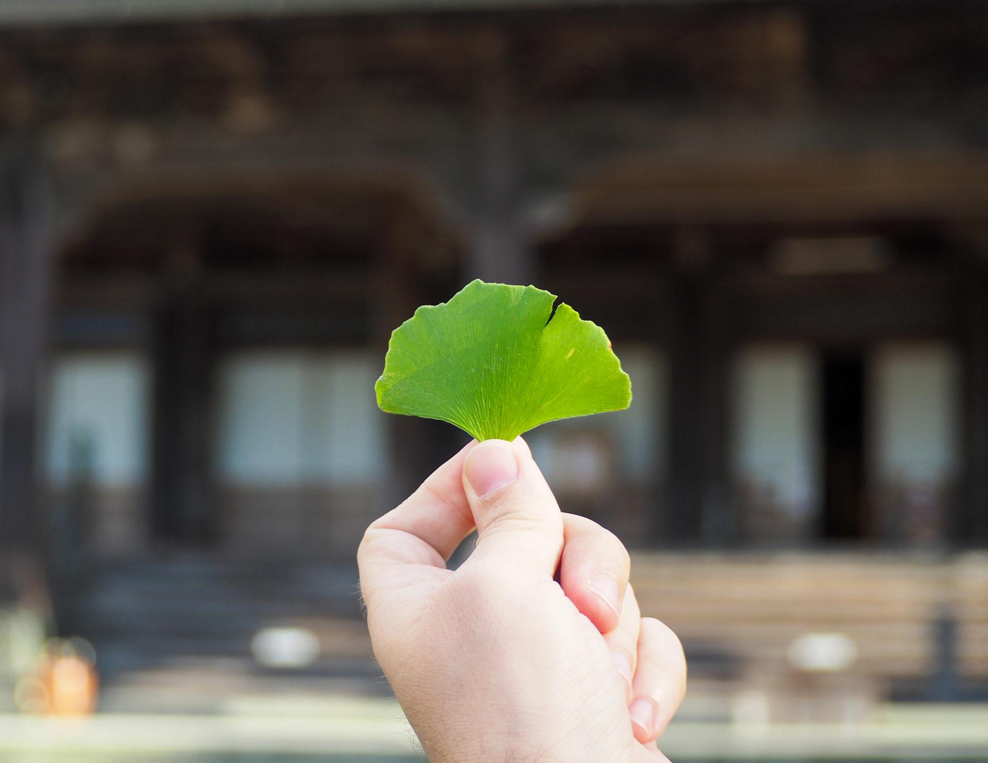 Feuille de gingko dans un temple dans la Préfecture de Toyama, porte d'entrée vers les Alpes Japonaises - Voyager au Japon hors des sentiers battus