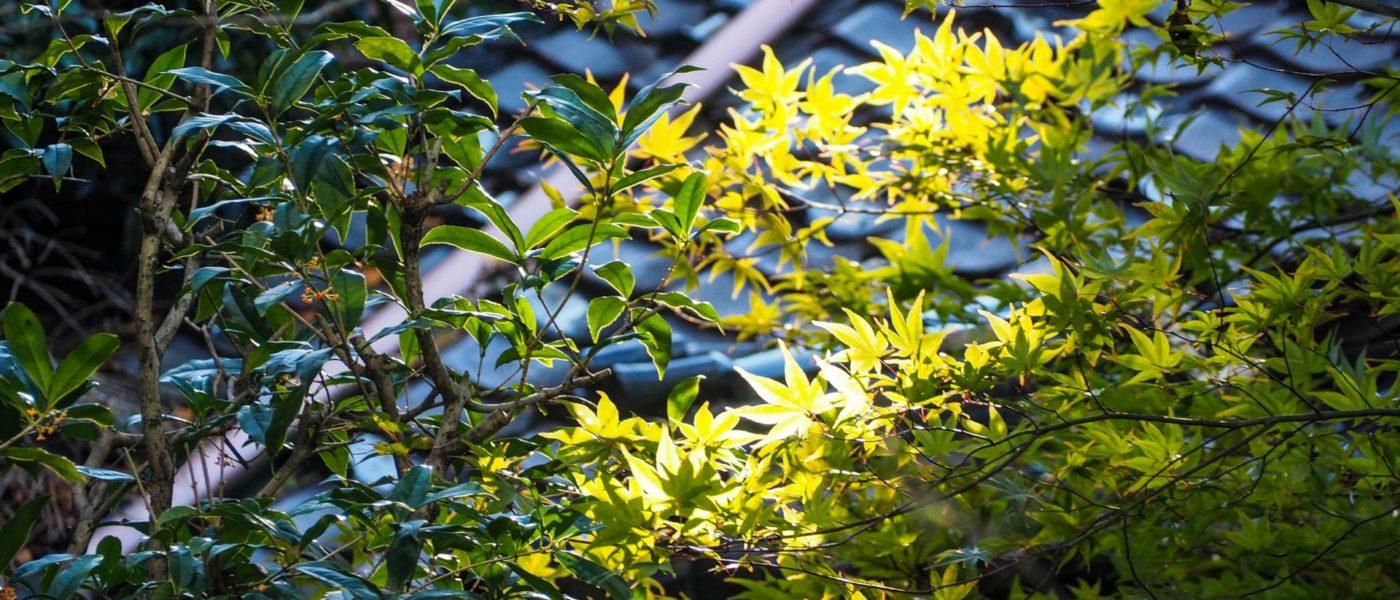 Inami, la ville du vent et du bois à Toyama - Préfecture de Toyama, porte d'entrée vers les Alpes Japonaises - Voyager au Japon hors des sentiers battus - Journal de confinement J6 - Une voyageuse au temps du Coronavirus