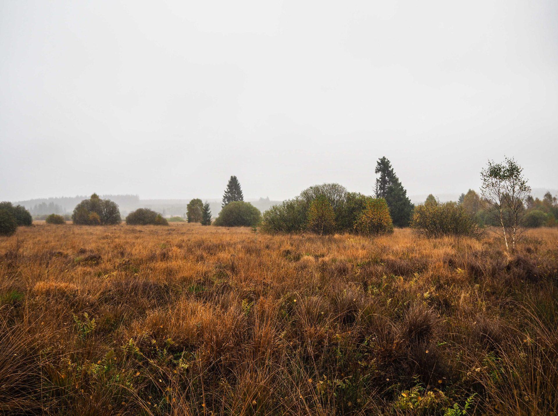Parc naturel des Hautes-Fagnes à l'automne - Ardenne Belge - Province de Liège - Voyage slow en Belgique