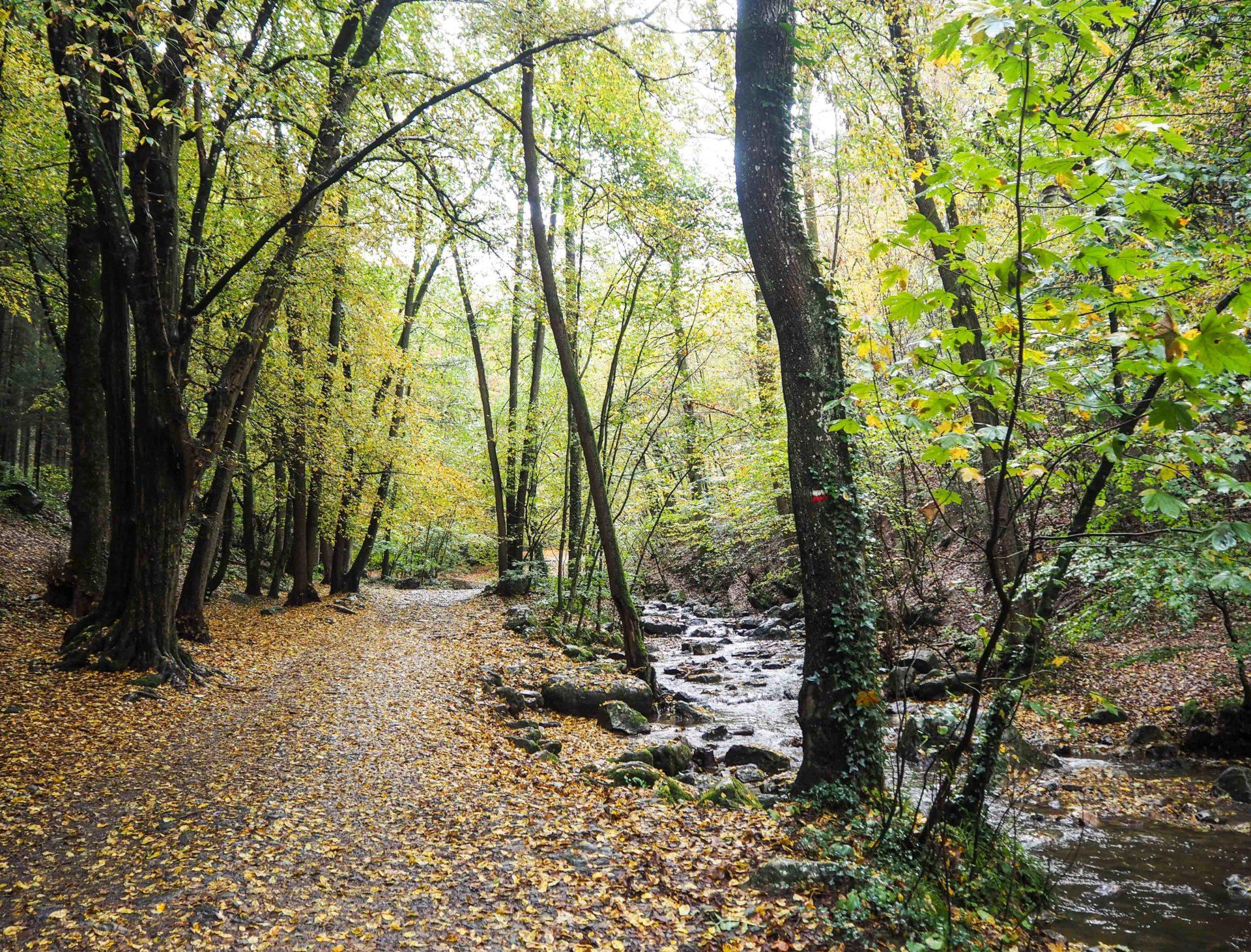 L'automne dans le Vallon du Ninglinspo - Ardenne Belge - Province de Liège - Voyage slow en Belgique