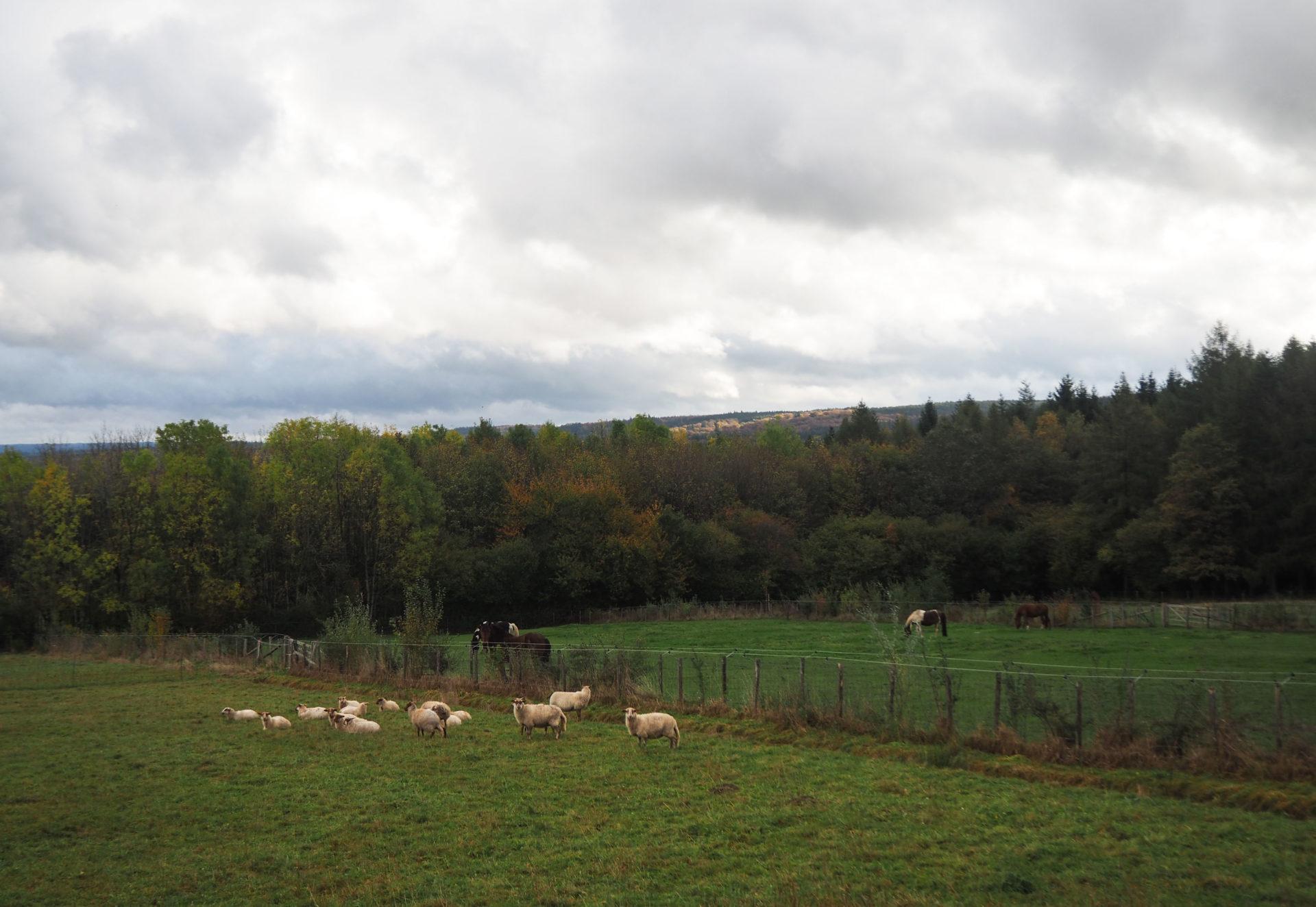 Permaculture à la Ferme de Desnié - Ardenne Belge - Province de Liège - Voyage slow en Belgique