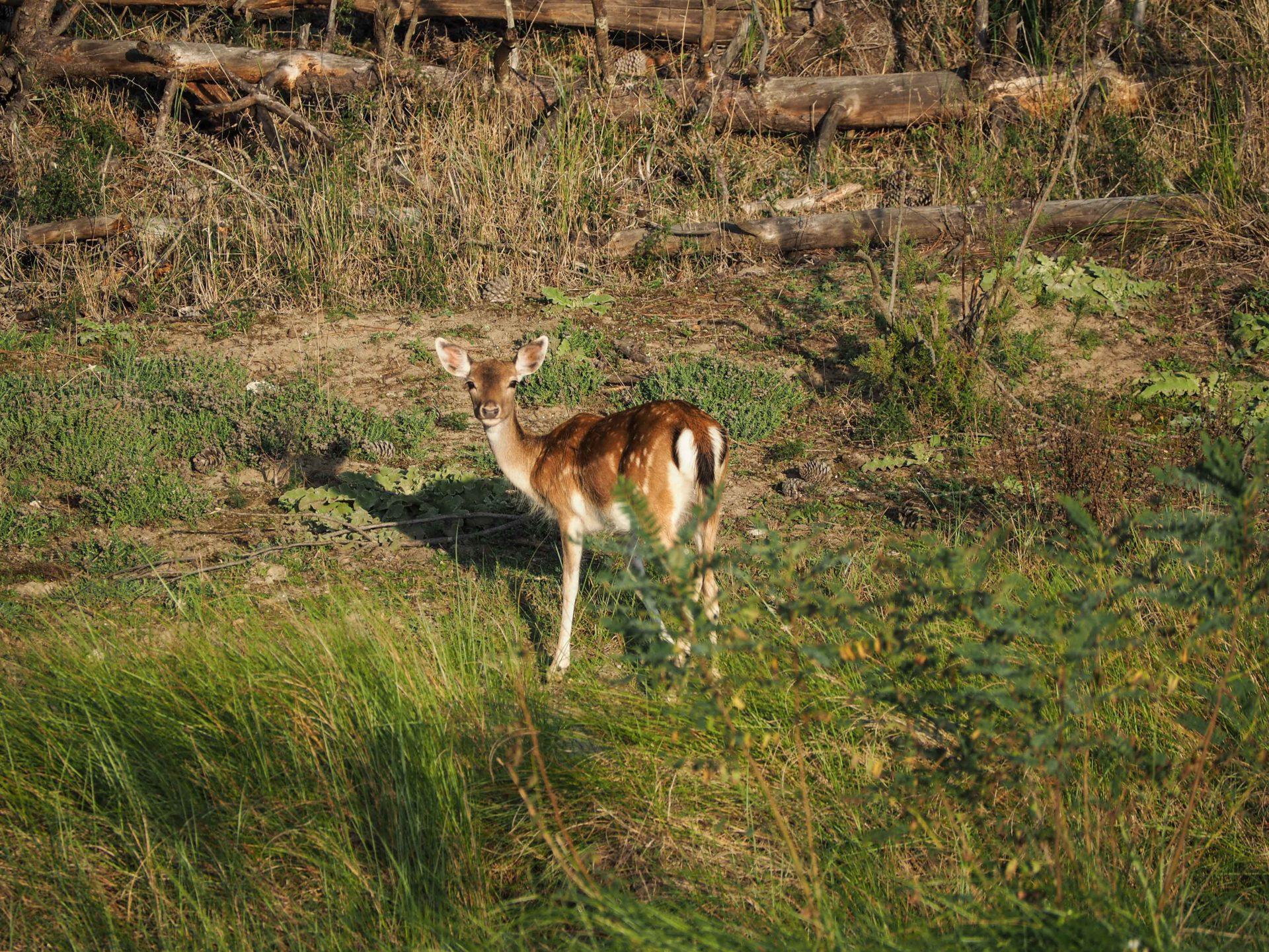 A la découverte du Delta du Pô - Un voyage nature en Emilie-Romagne, au coeur du Delta du Pô sur la côte Adriatique et du Parc national de la Forêt Casentinesi, Mont Falterona et Campigna dans les Apennins en Italie