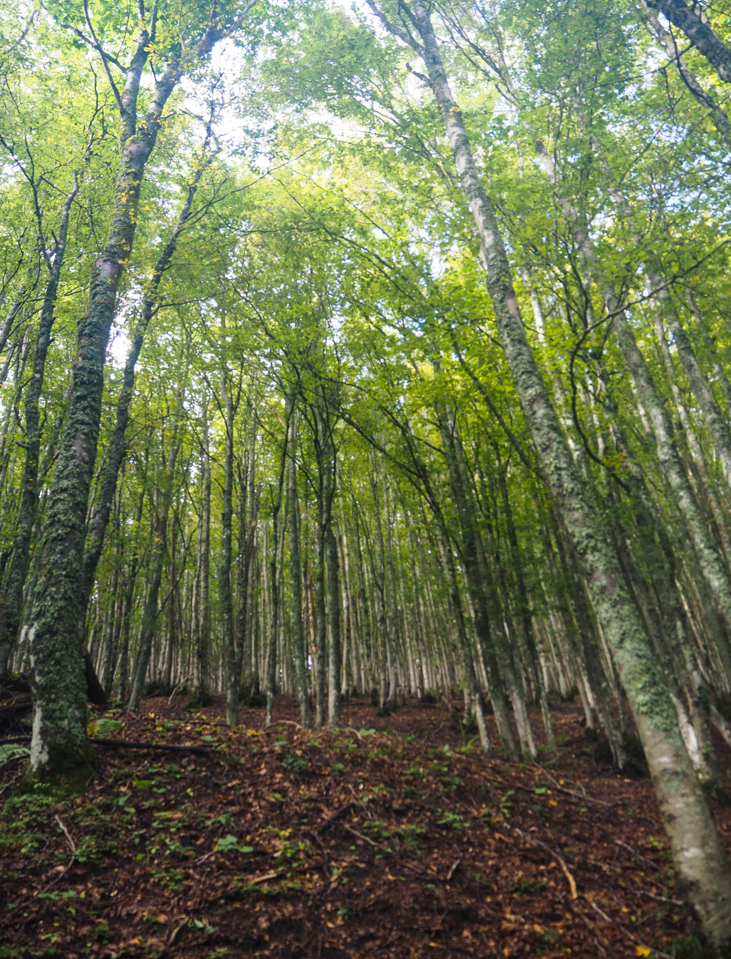 Un voyage nature en Emilie-Romagne, au coeur du Delta du Pô sur la côte Adriatique et du Parc national de la Forêt Casentinesi, Mont Falterona et Campigna dans les Apennins en Italie