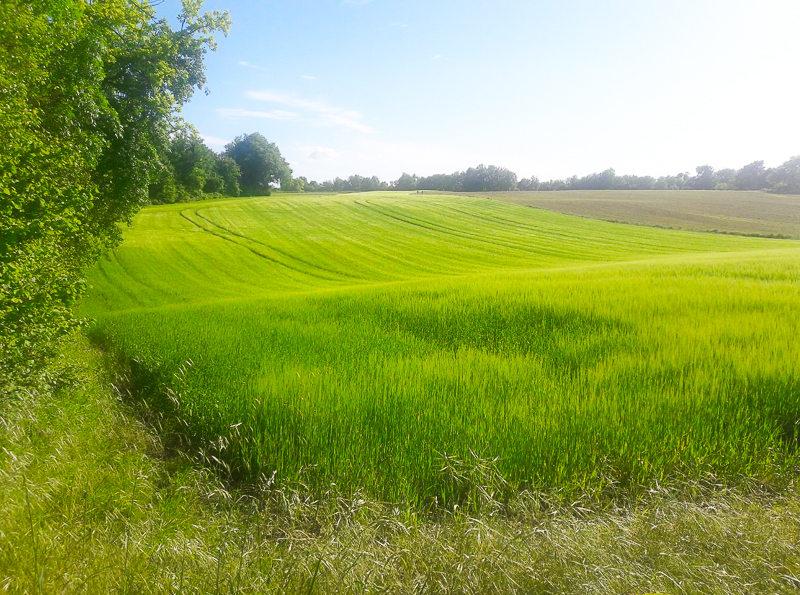 Voir les champs évoluer au fil des saisons pendant le confinement